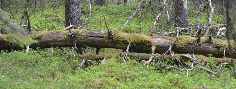 Naturglede-skogsvern